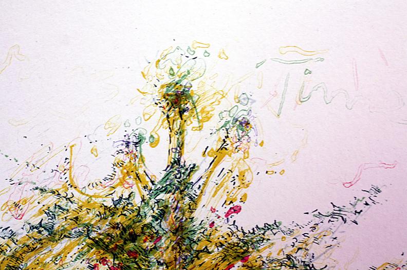 dandelion in dave's backyard